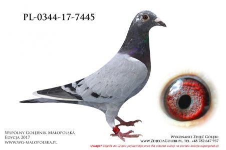 PL-0344-17-7445