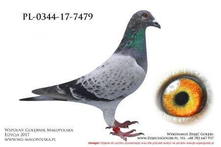 PL-0344-17-7479