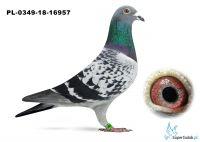 PL-0349-18-16957