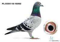 PL-0349-18-16982
