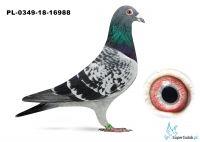 PL-0349-18-16988