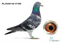 PL-0349-18-17100