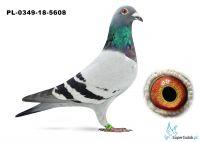 PL-0349-18-5608