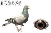 PL-0350-20-2445