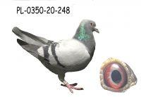 PL-0350-20-248
