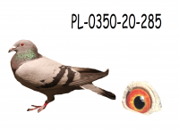 PL-0350-20-285