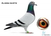 PL-0354-18-9772