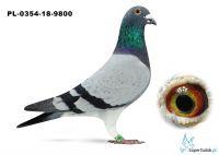 PL-0354-18-9800