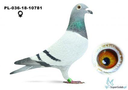 PL-036-18-10781 - 100% Rauw-Sablon