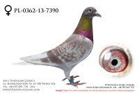 PL-0362-13-7390 - likwidacja hodowli