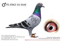 PL-0362-14-1644 - likwidacja hodowli