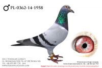 PL-0362-14-1958 - likwidacja hodowli