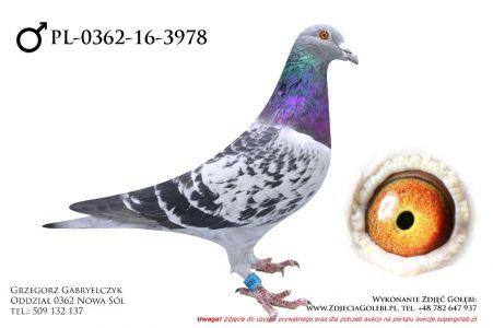 PL-0362-16-3978 - samczyk