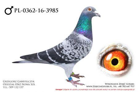 PL-0362-16-3985 - samczyk