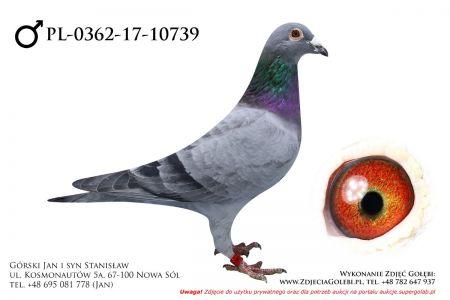 PL-0362-17-10739