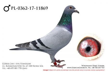 PL-0362-17-11869