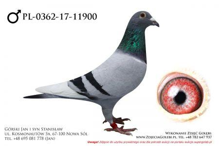 PL-0362-17-11900