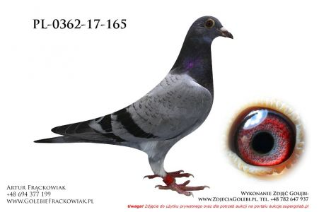 PL-0362-17-165