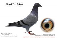 PL-0362-17-166