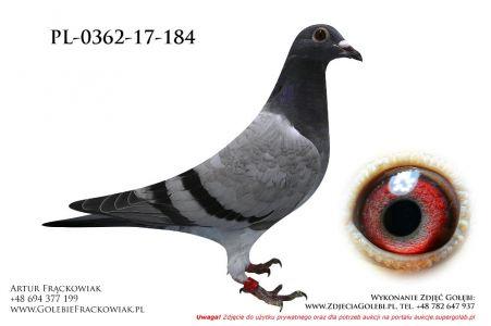 PL-0362-17-184
