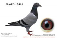 PL-0362-17-185