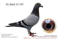 PL-0362-17-197