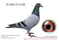 PL-0362-17-2138