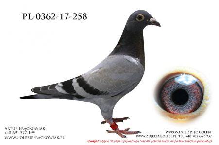 PL_0362-17-258