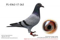 PL-0362-17-262