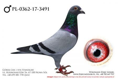 PL-0362-17-3491