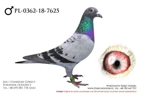 PL-0362-18-7625 - samczyk