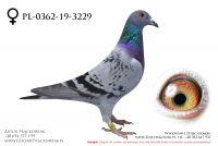 PL-0362-19-3229 - samiczka