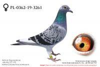 PL-0362-19-3261 - samiczka