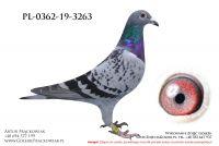 PL-0362-19-3263