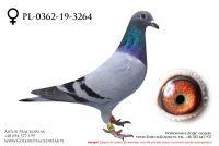 PL-0362-19-3264 - samiczka