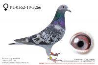 PL-0362-19-3266 - samiczka