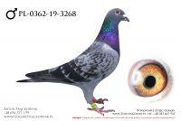 PL-0362-19-3268 - samczyk