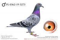 PL-0362-19-3273 - samczyk