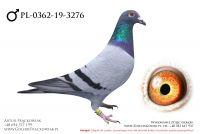 PL-0362-19-3276 - samczyk