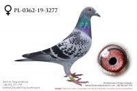 PL-0362-19-3277 - samiczka