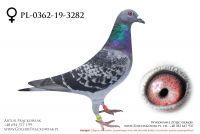 PL-0362-19-3282 - samiczka