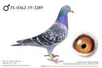 PL-0362-19-3289 - samczyk
