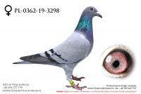 PL-0362-19-3298 - samiczka