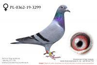 PL-0362-19-3299 - samiczka
