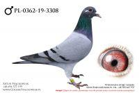 PL-0362-19-3308 - samczyk