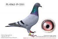 PL-0362-19-3311
