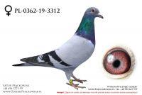 PL-0362-19-3312 - samiczka
