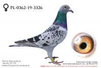 PL-0362-19-3326 - samiczka