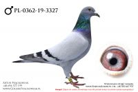 PL-0362-19-3327 - samczyk