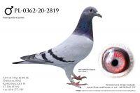PL-0362-20-2819 - Schaerlackens, van Dyck Vandenabeele, van de Pasch